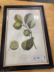 Lemon\/Lime Vintage Advertiser Print