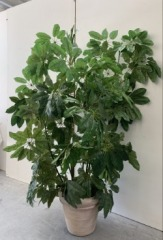 GENTLY USED Faux Plant